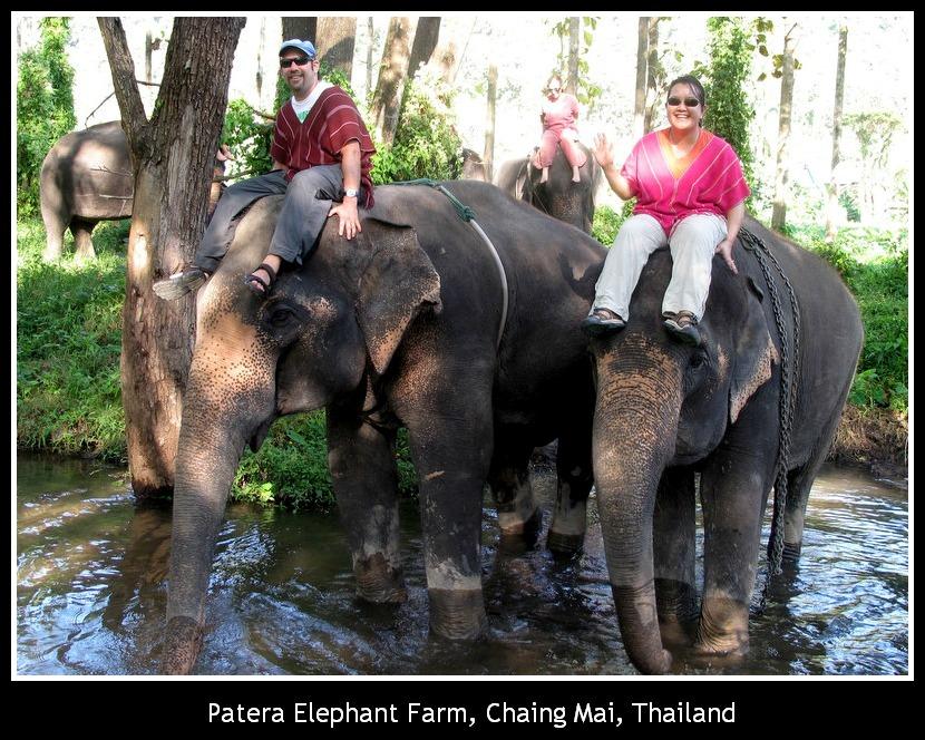 Patera elephant farm