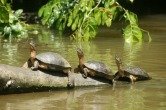 "Costa Rica is a fabulous place and Plan B if we need to return to this hemisphere. This place is Tortugero, ""the land of the turtles"""