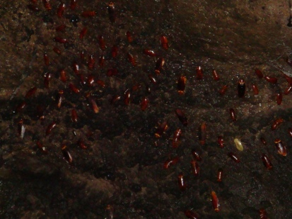 millions of disgusting roaches