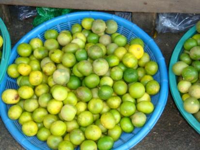 Kaffir Limes like no others