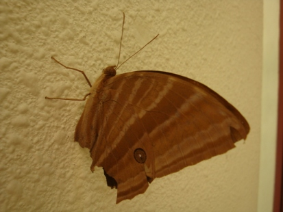 moth ?