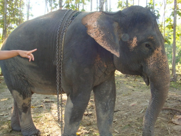 All the elephants were rescued from poor working conditions elsewhere