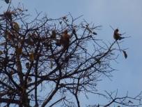 tree monkey 6