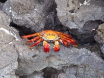 cool looking crab