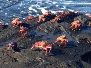 crabs 3