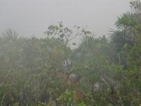surreal in the rain