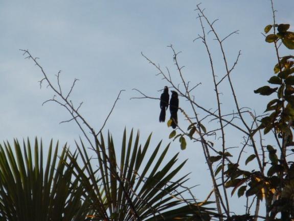 sacha birds