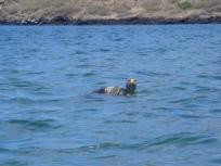 sea tortoise