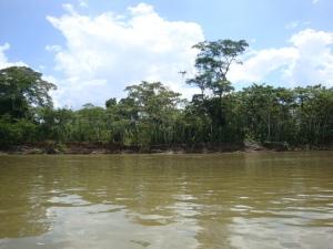 heading up the Napo River