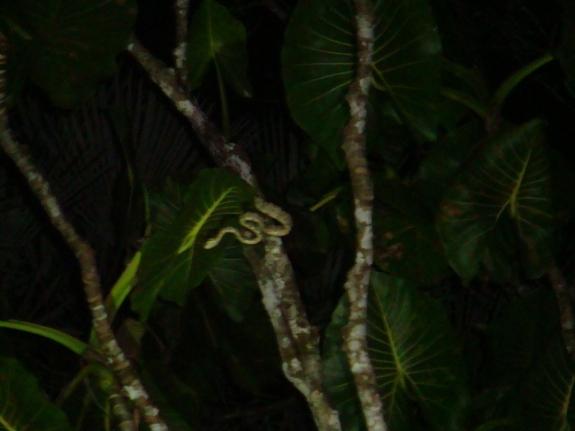 A viper and a rare spot