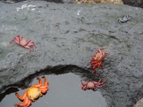tidal pool with crabs