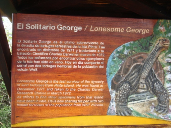 lonesome george 2