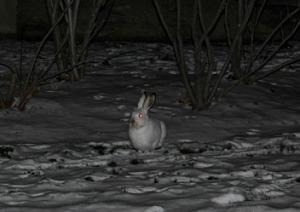 birds-bunny