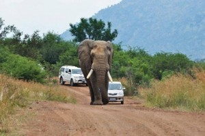 2014 was like being in the car behind the elephant