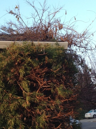 the wisteria mess
