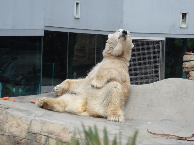san diego zoo 4