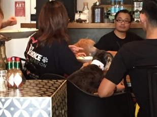 Dogs in restaurants? Strange to us